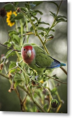 Lovely Little Lovebird Metal Print by Saija  Lehtonen