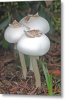 Lovely Trio Metal Print by Jeanne Kay Juhos