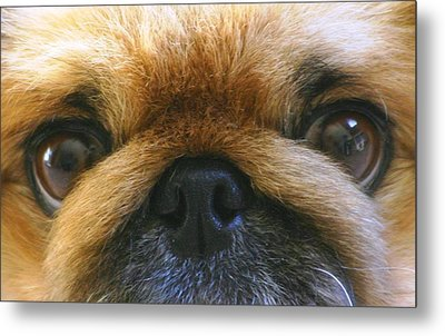 Metal Print featuring the photograph Loving Eyes by Jeanne Andrews