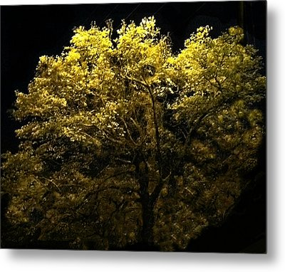 Metal Print featuring the photograph Luminescent Dogwood  by Elizabeth Coats