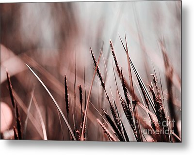 Luminis - S03a - Brown Metal Print by Variance Collections