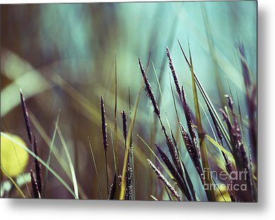 Luminis 02 - S01a Metal Print by Variance Collections