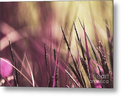 Luminis 02 - S11a Metal Print by Variance Collections