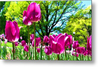 Luminous Purple Tulips In A Flower Garden And Sunny Green Trees Under A Blue Sky Metal Print by Chantal PhotoPix