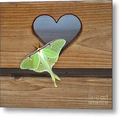 Luna Moth In Love Metal Print by The Kepharts