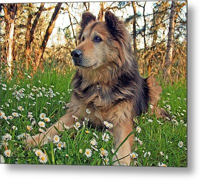 Lying In The Daisys Metal Print by Tyra  OBryant