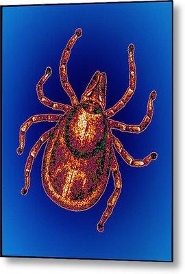Lyme Disease Tick Metal Print by Pasieka