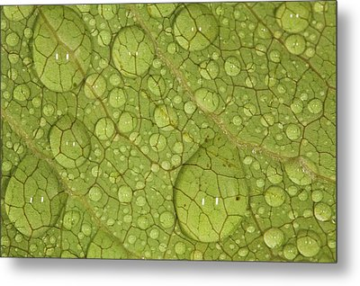 Macro Image Of A Magnolia Leaf Metal Print by Laszlo Podor Photography