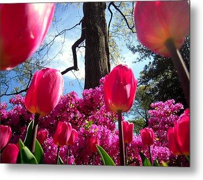 Maestro Tree Conducts The Flower Orchestra Metal Print