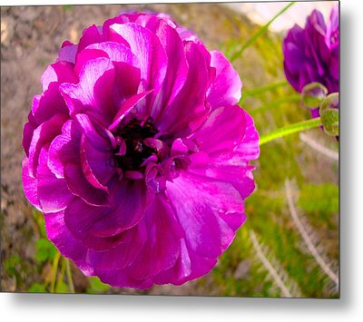 Magenta Magic II Metal Print by Tamara Bettencourt