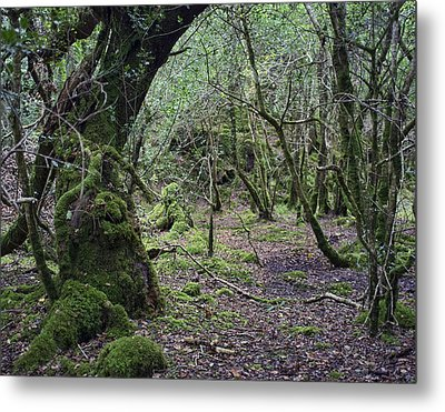 Metal Print featuring the photograph Magical Forest by Hugh Smith