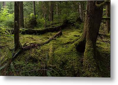 Magical Forest Metal Print by Mike Reid