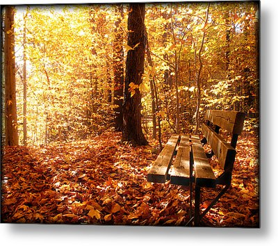 Magical Sunbeams On The Best Seat In The Forest Metal Print by Chantal PhotoPix