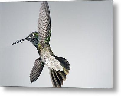 Magnificent Victorious Warrior Metal Print by Gregory Scott