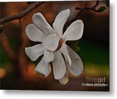 Metal Print featuring the photograph Magnolia Bloom by Barbara McMahon
