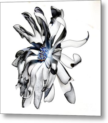 Magnolia Bloom Metal Print by Mark McReynolds
