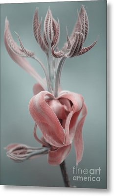 Magnolia  Metal Print by September  Stone