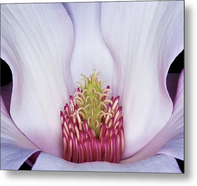 Magnolia Impression Number 2 Metal Print