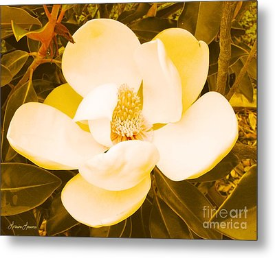 Magnolia In Color Metal Print by Lorraine Louwerse