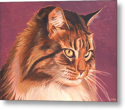 Maine Coon Portrait Metal Print by Shawn Shea