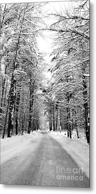 Maine Deep Woods Tall Trees Metal Print by Christy Bruna