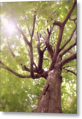 Metal Print featuring the photograph Majestic Maple by Brooke T Ryan