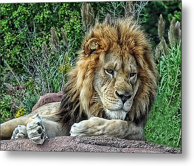 Majestic Metal Print by Tazz Anderson