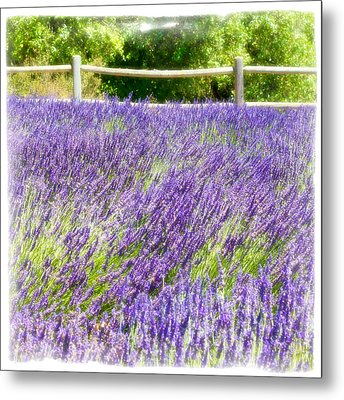 Metal Print featuring the photograph Makes Scents by Ryan Weddle
