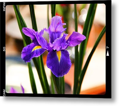 Metal Print featuring the photograph Mamas Iris by Alice Gipson
