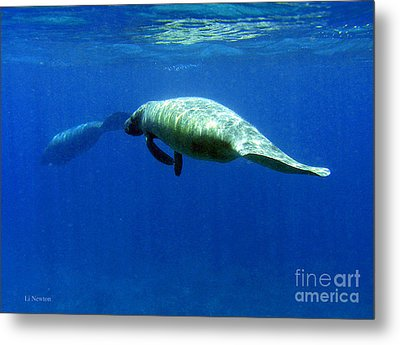 Manatee Magic Metal Print