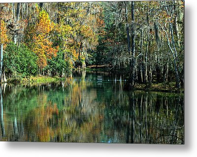 Manatee Spring Florida Metal Print by Ronald T Williams
