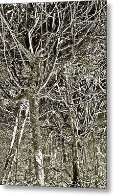 Mangrove Abstract Metal Print