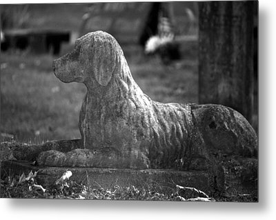 Mans Best Friend Metal Print by Penny Hunt