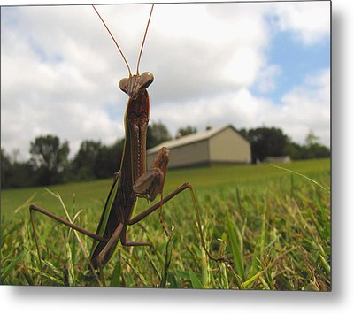 Metal Print featuring the photograph Mantis by John Crothers
