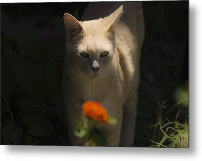 Many Moods Of Kitty Metal Print by Kim Henderson