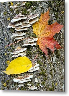 Maple Autumn Leaf On A Tree Trunk Metal Print by Aleksandr Volkov