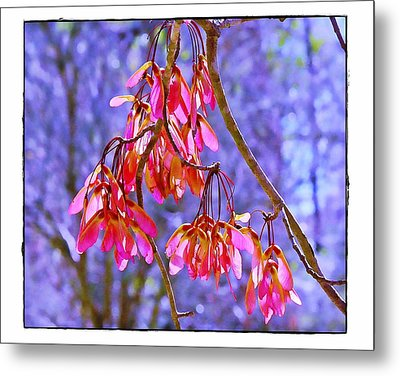 Metal Print featuring the photograph Maple Keys by Judi Bagwell