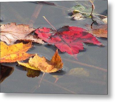 Maple Leaf Reflection Metal Print