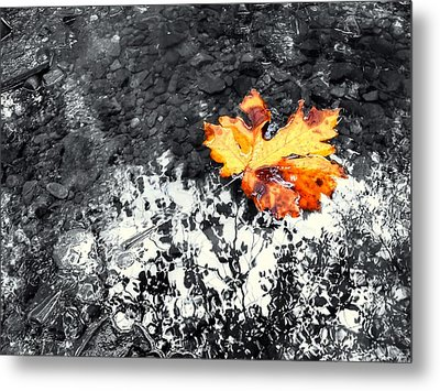 Maple Leaf Selective Color Metal Print