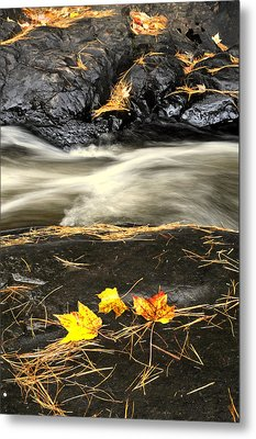 Maple Leaves And Water Metal Print