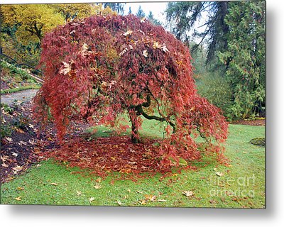 Maple Shower Metal Print
