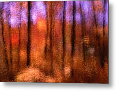 Maple Trees In Autumn, Gatineau Park, Quebec, Canada Metal Print