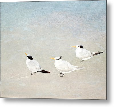 Metal Print featuring the photograph Marco Trio by Karen Lynch