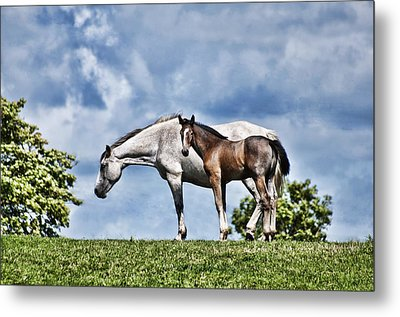 Mare And Foal Metal Print by Steve Purnell