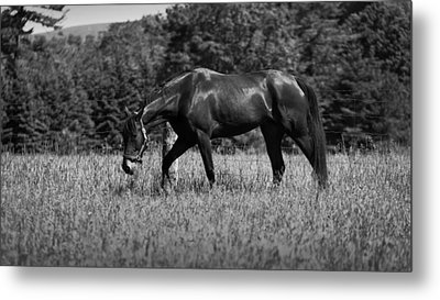 Metal Print featuring the photograph Mare In Field by Davandra Cribbie