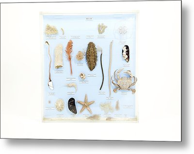 Marine Life Specimens Metal Print by Gregory Davies, Medinet Photographics