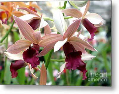 Metal Print featuring the photograph Maroon Bloom by Debbie Hart