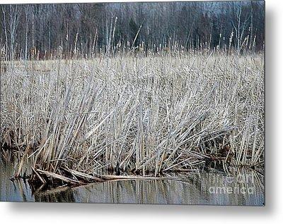 Marsh Land Metal Print by Kathleen Struckle