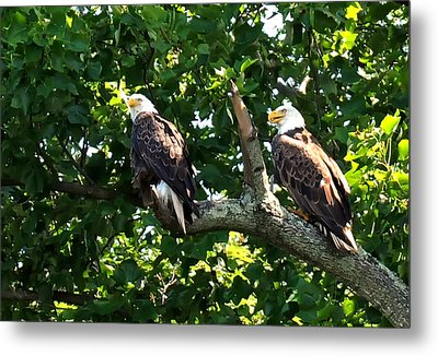 Metal Print featuring the photograph Mating Pair by Randall Branham