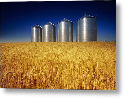 Mature Winter Wheat Field With Grain Metal Print by Dave Reede